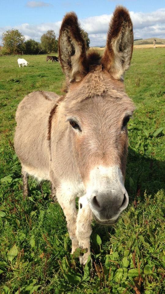 Photo of Patrick, the donkey